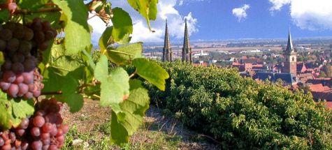Balade ensoleillée dans le vignoble d'Obernai
